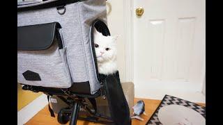 [협찬] [자막없음] 고양이유모차 로얄테일즈 트래블러로…