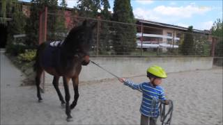 I&H Horses riport