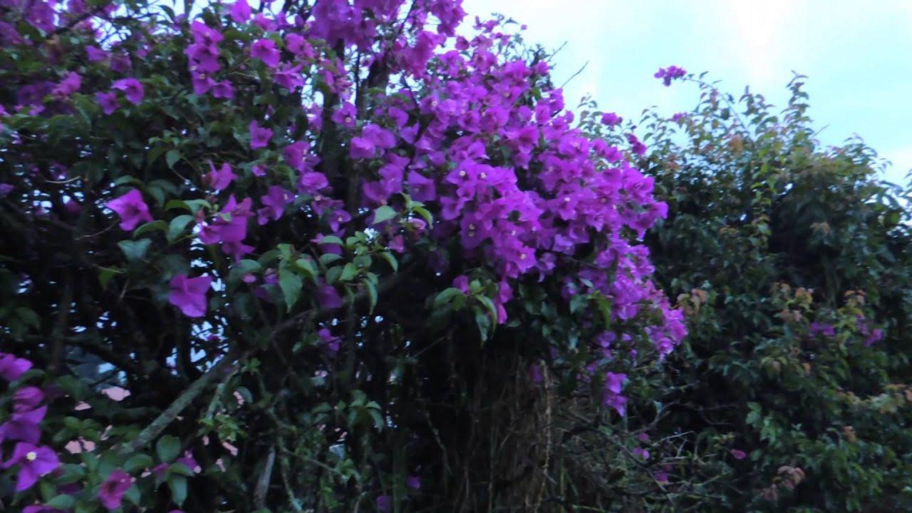 8225 planta de flores purpuras en campo de clima frio for Plantas de jardin resistentes al frio