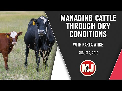 Managing Cattle Through Dry Conditions | Karla Wilke | August 7, 2020