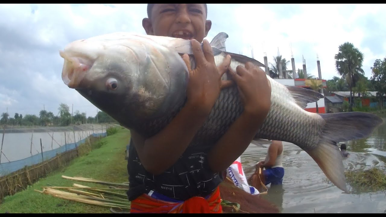 Omg how big fish   Big fish catching by small Boy