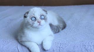 Самые популярные породы кошек в мире!