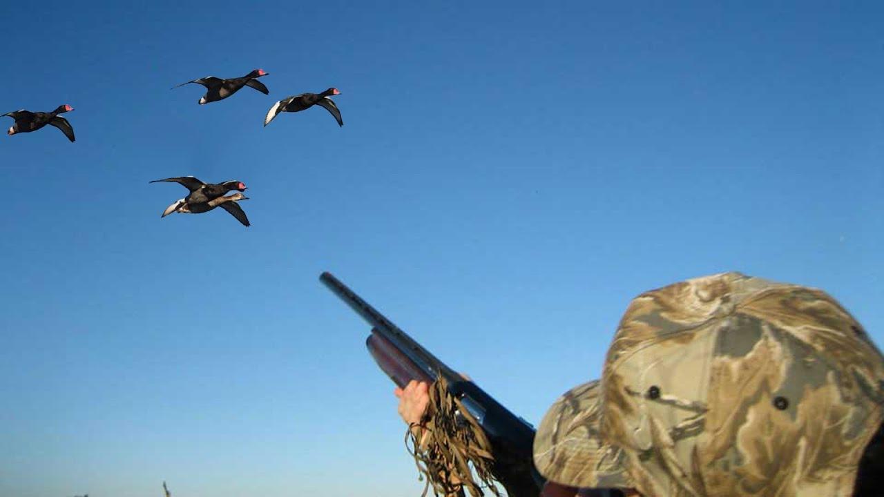 Duck hunting 2016 - Yo...