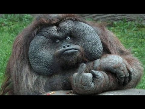 FUNNY ANIMALS COMPILATION 😂🙈 BEST OF THE YEAR 2016 NEW - Funny Animal Videos Ever