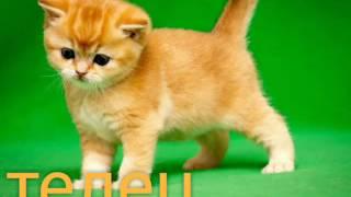 Кто ты по знаку зодиака из котят?