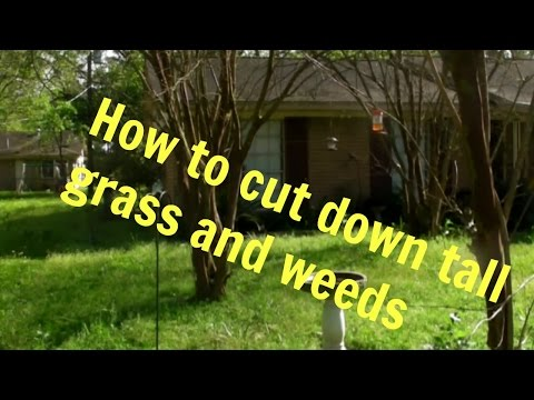 Cut Down Tall Gr And Weeds You