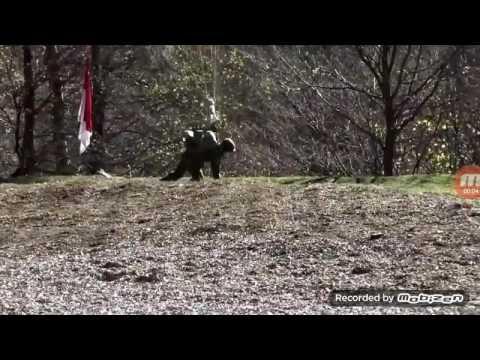 "Swiss special forces(AZ SK)[ ""Hustler"""