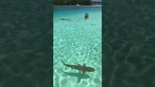 Tahiti :swimming with sharks