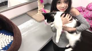 Visit to Petsmart/my love for cats