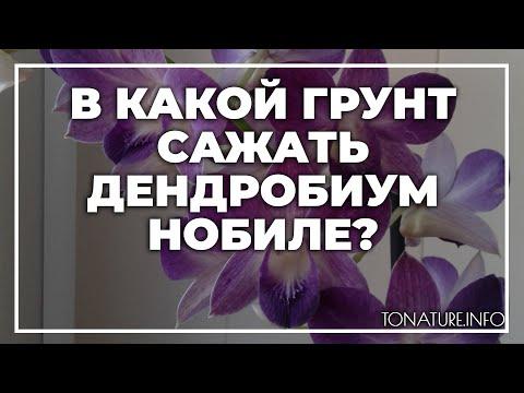 В какой грунт сажать дендробиум нобиле?   toNature.Info
