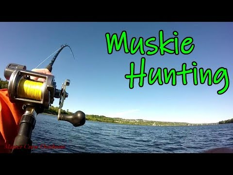 Muskie Hunting Saint John River Canada 2018-Underwater Views!