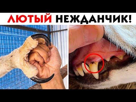 55 ЛЮТЫХ НЕОЖИДАННОСТЕЙ ИЗ ДИКОГО МИРА! - Видео онлайн