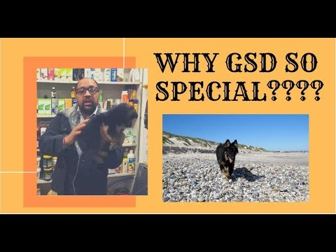 WHY GSD SO SPECIAL????