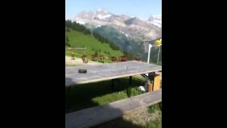 Goats scurrying in the Swiss Alps