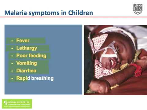 Clinical Presentation of Malaria by Lucille Blumberg, National Institute for Communicable Diseases 1