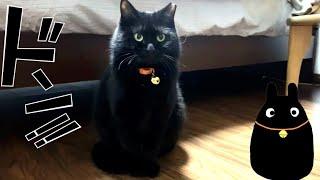 実家の保護猫ロンがドンドン太ってトトロ化しています…