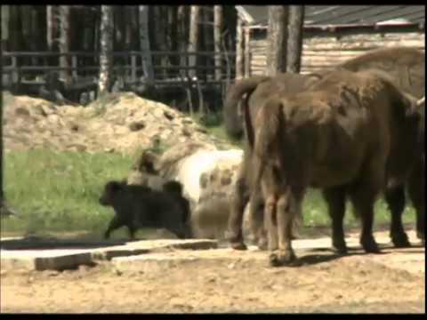 Ярославский зоопарк отправит животных в Крым
