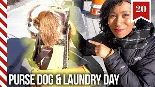 I Put My Dog in A Bag & Laundry Closet Update | Vlogmas Day 20