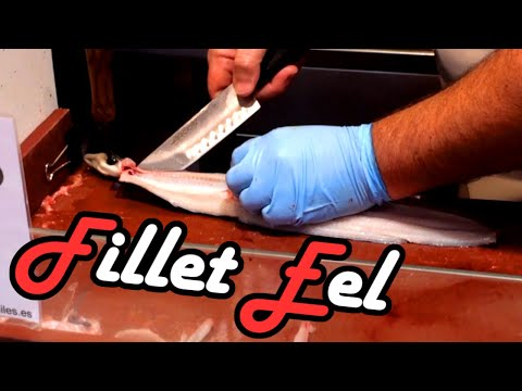 Filleting - Cutting and cleaning of a live Eel - Valenica Fish Market