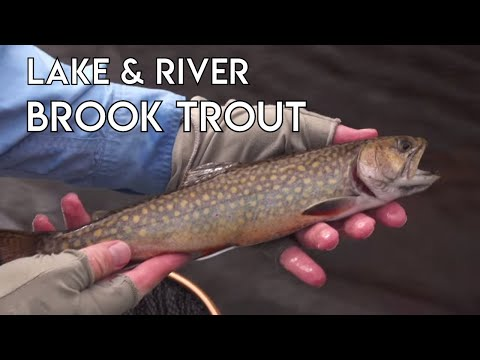 Lake & River Brook Trout Fishing