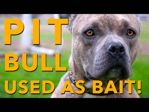 You Won't Believe What This Pit Bull Has Gone Through!  Please share.