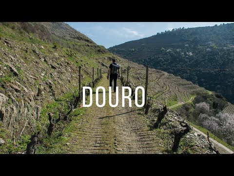 A DAY IN DOURO