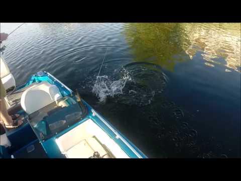 Fishing Lake Manistee 2016