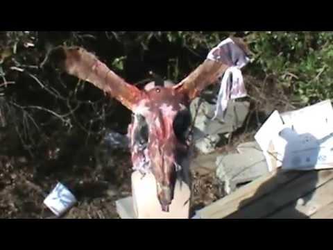 The Hare, Custom Horror Mask