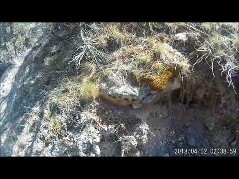 Lost Dutchman's Mining Association-Prospecting The LDMA Cave Creek Property