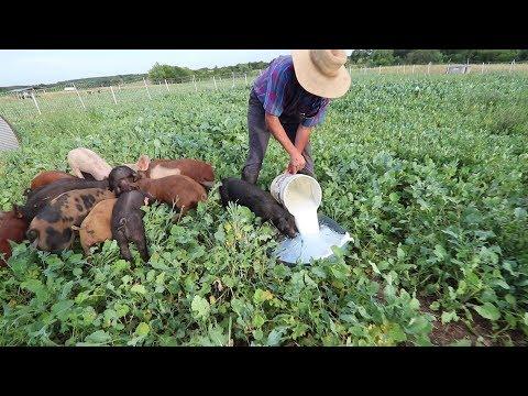 PIG Farmer Revolutionizes Health Food