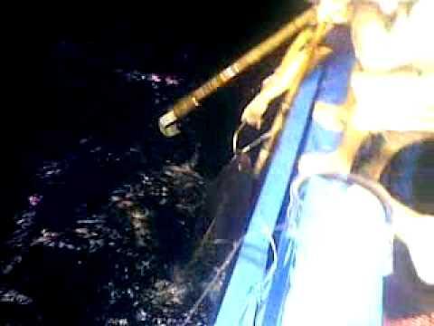 Câu cá ngừ đại dương siêu khủng
