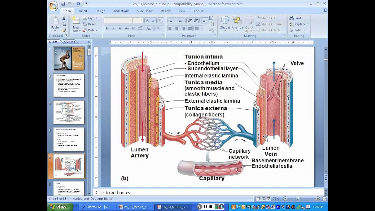 Chapter 19 Blood Vessels Part 1 - YouTube