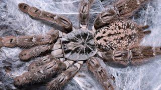 Feeding 5 of my tarantulas.
