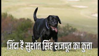 sushant singh rajput death inside story || सुशांत सिंह राजपूत के कुत्ते की हुई मौत ||