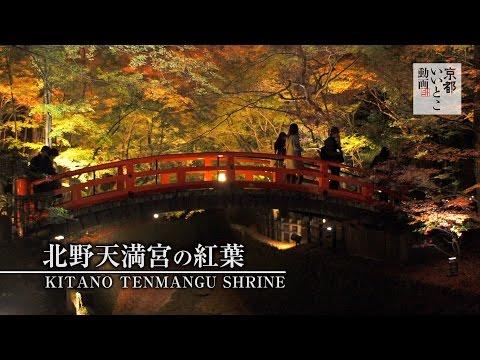 北野天満宮の紅葉 / Kitano tenmangu Shrine / 京都いいとこ動画