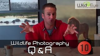 Wildlife Photography Q&A:  Episode 10
