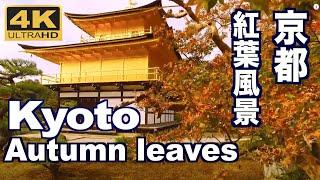 [4K]KYOTO JAPAN 美しい京都の紅葉 More beautiful Kyoto autumn in the world 京都観光 日本の紅葉