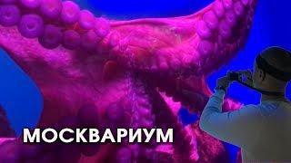 Москвариум. Обзор Московского океанариума. The biggest aquarium in Moscow.