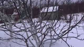 видео Работы на даче в декабре