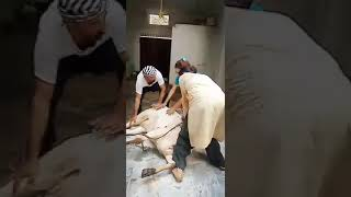 Cow Slaughtering By Lady..
