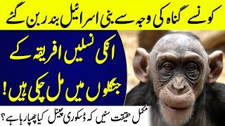 Nation Who Was Transformed Into Monkeys See The Reality | Islamic Solution