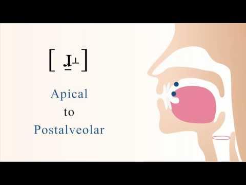 [ ɹ̠˔ ] voiced apical postalveolar non sibilant fricative