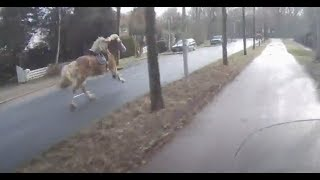 Scooterdriver helps woman catch her runaway horse