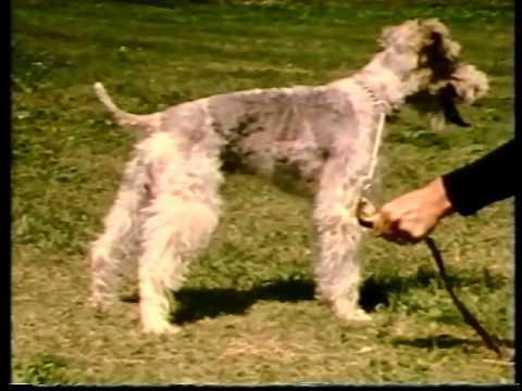 AKC Video Series - Dog Steps