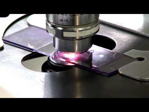 Лабораторные методы исследований: гематология