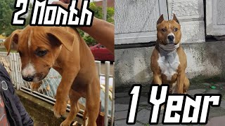 AMSTAFF 2 month to 1 years