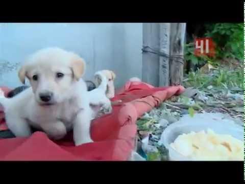Стерилизация собак: в каком возрасте, как и зачем?