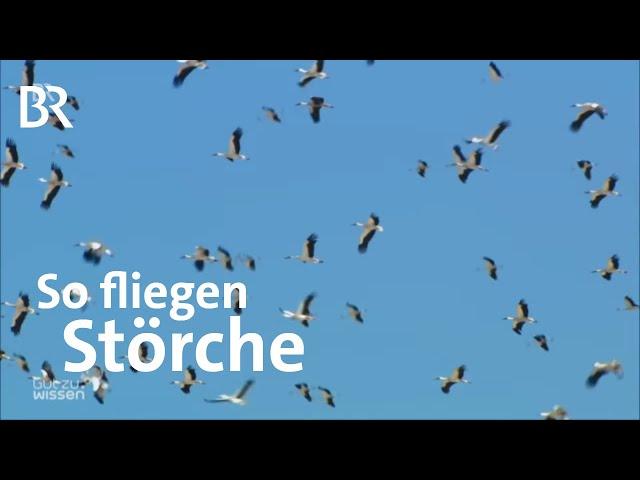 Storchenflug - Lahme Enten und Kunstflieger | Gut zu wissen