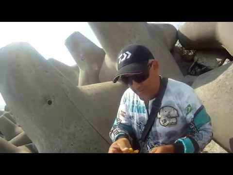 robalo flecha 7.800 kg molhe Itajaí 26/10/2014