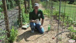 Garden Tutorial: Planting Zucchini